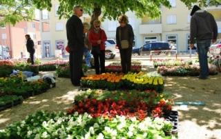 Drugi-festival-Baska-rozica-Cvjetni-susur-postaje-brend_ca_large